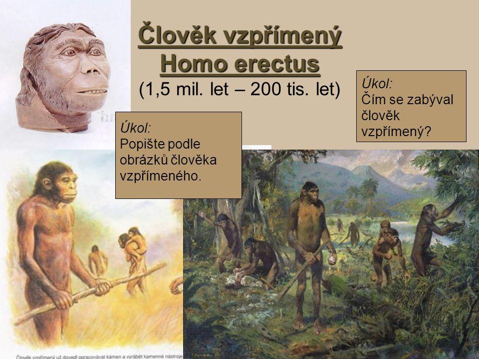 Člověk vzpřímený Homo erectus Člověk vzpřímený Homo erectus (1,5 mil. let – 200 tis. let) Úkol: Popište podle obrázků člověka vzpřímeného. Úkol: Čím s
