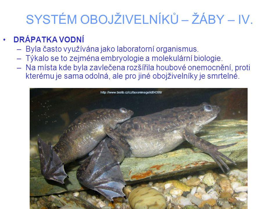 SYSTÉM OBOJŽIVELNÍKŮ – ŽÁBY – IV. DRÁPATKA VODNÍ –Byla často využívána jako laboratorní organismus.
