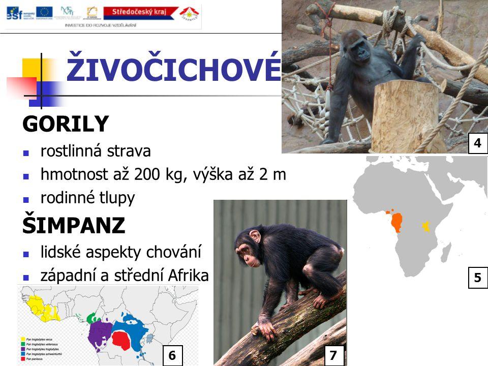 ŽIVOČICHOVÉ GORILY rostlinná strava hmotnost až 200 kg, výška až 2 m rodinné tlupy ŠIMPANZ lidské aspekty chování západní a střední Afrika 6 4 5 7