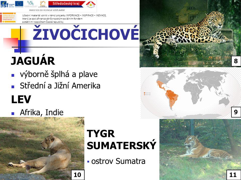 ŽIVOČICHOVÉ JAGUÁR výborně šplhá a plave Střední a Jižní Amerika LEV Afrika, Indie TYGR SUMATERSKÝ  ostrov Sumatra 8 9 1011 Učební materiál vznikl v