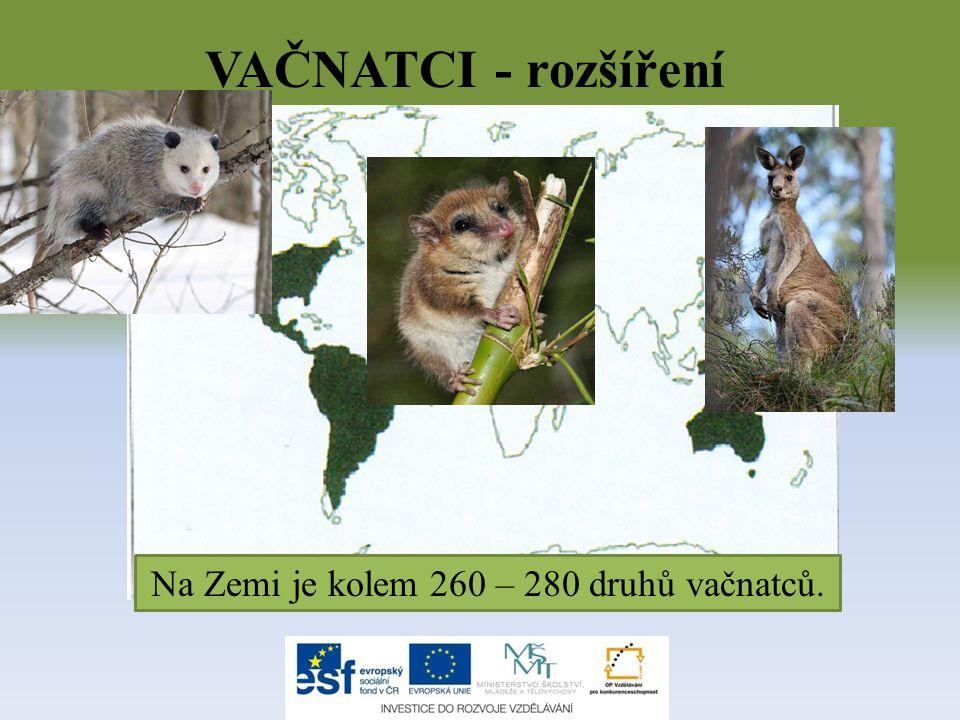 VAČNATCI - rozšíření Na Zemi je kolem 260 – 280 druhů vačnatců.