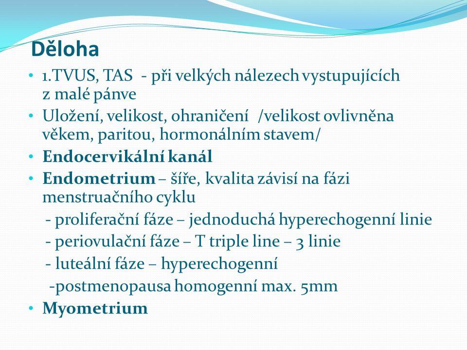 Děloha 1.TVUS, TAS - při velkých nálezech vystupujících z malé pánve Uložení, velikost, ohraničení /velikost ovlivněna věkem, paritou, hormonálním sta