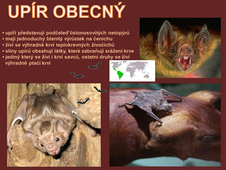 upíři představují podčeleď listonosovitých netopýrů mají jednoduchý blanitý výrůstek na čenichu živí se výhradně krví teplokrevných živočichů sliny upírů obsahují látky, které zabraňují srážení krve jediný který se živí i krví savců, ostatní druhy se živí výhradně ptačí krví