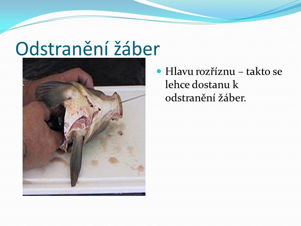 Odstranění žáber Hlavu rozříznu – takto se lehce dostanu k odstranění žáber.