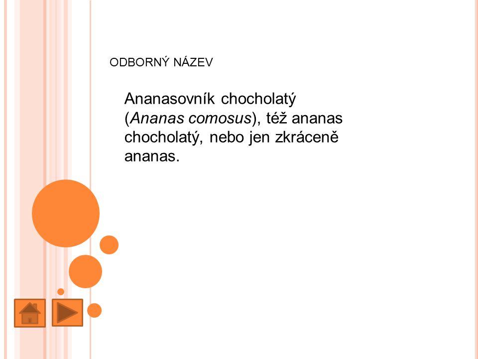 ODBORNÝ NÁZEV Ananasovník chocholatý (Ananas comosus), též ananas chocholatý, nebo jen zkráceně ananas.