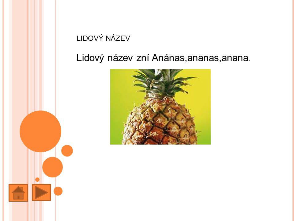 LIDOVÝ NÁZEV Lidový název zní Anánas,ananas,anana.