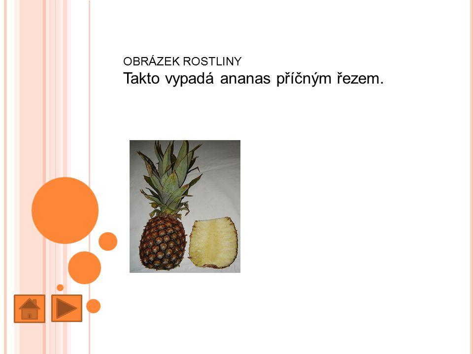 OBRÁZEK ROSTLINY Takto vypadá ananas příčným řezem.