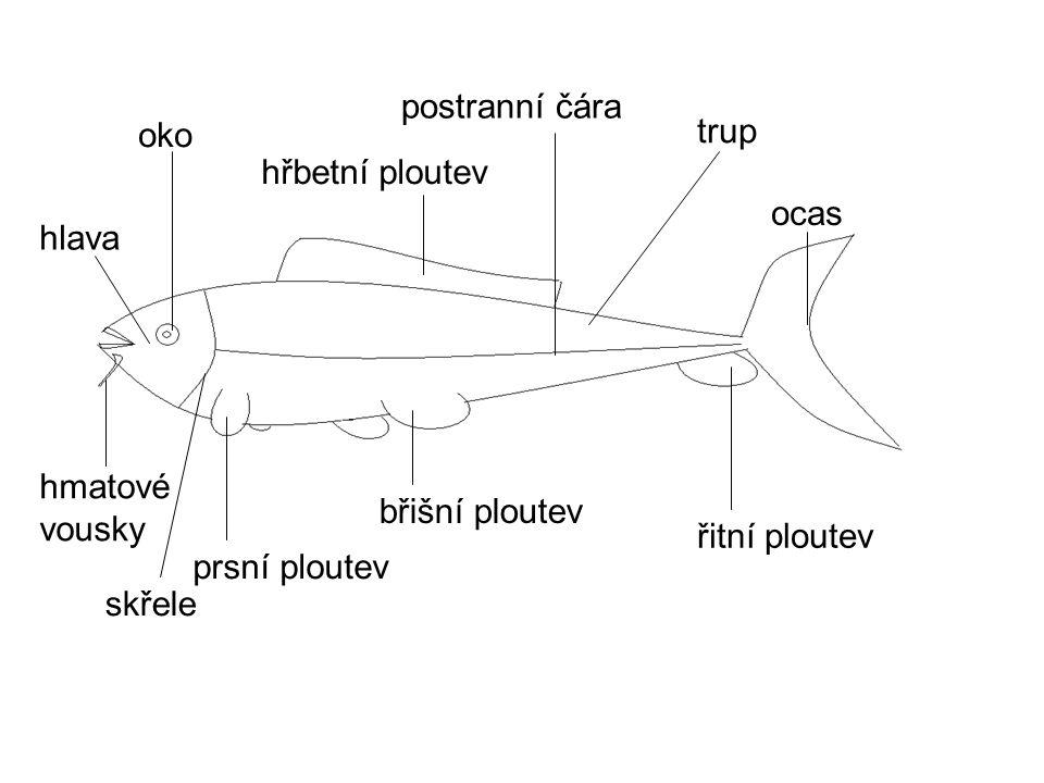 Ryby jsou důležitou součástí potravinového řetězce.