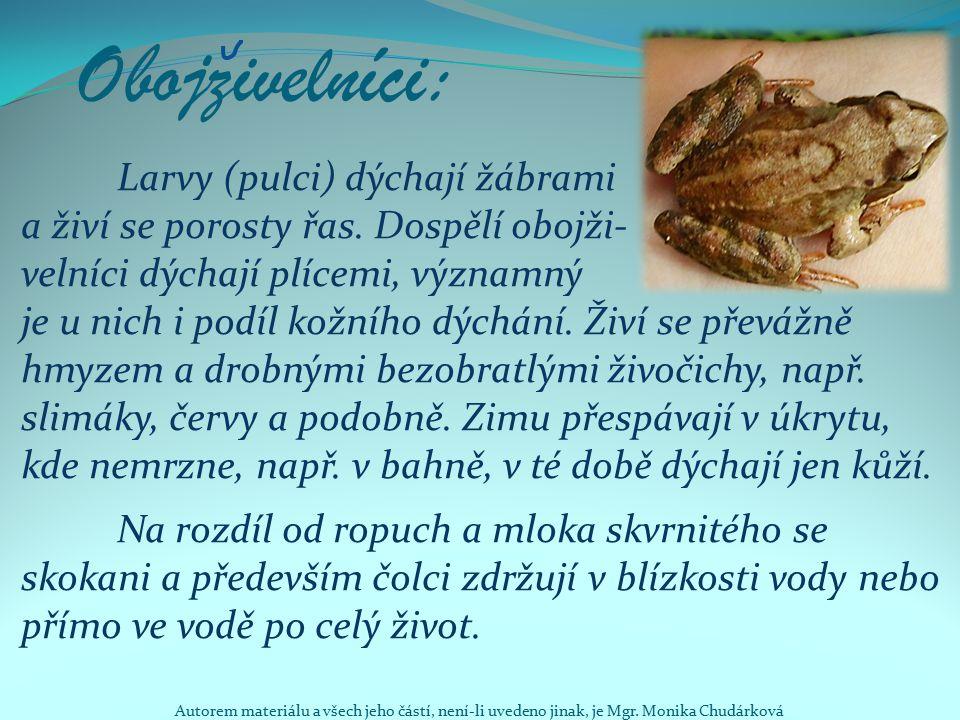 Obojzivelníci: Larvy (pulci) dýchají žábrami a živí se porosty řas. Dospělí obojži- velníci dýchají plícemi, významný je u nich i podíl kožního dýchán