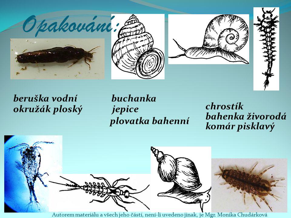 Opakování: beruška vodní komár pisklavý chrostík buchanka jepiceokružák ploský bahenka živorodá plovatka bahenní Autorem materiálu a všech jeho částí, není-li uvedeno jinak, je Mgr.