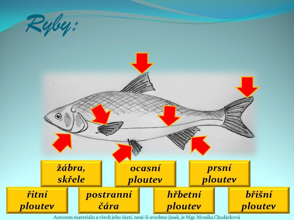 Ryby: Autorem materiálu a všech jeho částí, není-li uvedeno jinak, je Mgr. Monika Chudárková řitní ploutev postranní čára hřbetní ploutev břišní plout