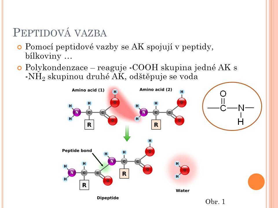 P EPTIDOVÁ VAZBA Pomocí peptidové vazby se AK spojují v peptidy, bílkoviny … Polykondenzace – reaguje -COOH skupina jedné AK s -NH 2 skupinou druhé AK