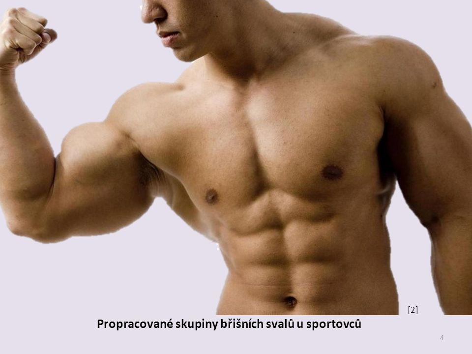 Propracované skupiny břišních svalů u sportovců 4 [2]