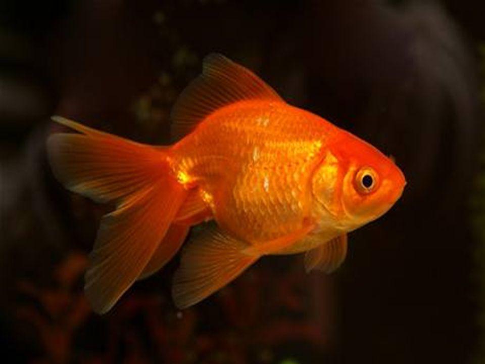 Druhy ryb o Kapr obecný o Štika obecná o Sumec velký o Candát obecný o Kapr obecný o Štika obecná o Sumec velký o Candát obecný
