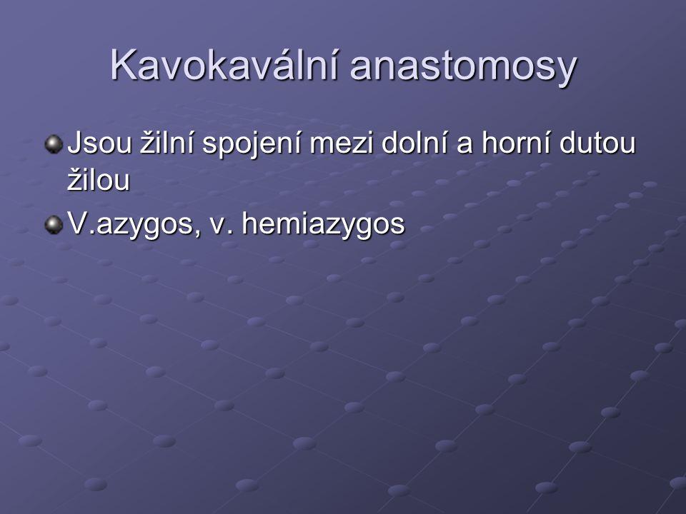 Kavokavální anastomosy Jsou žilní spojení mezi dolní a horní dutou žilou V.azygos, v. hemiazygos