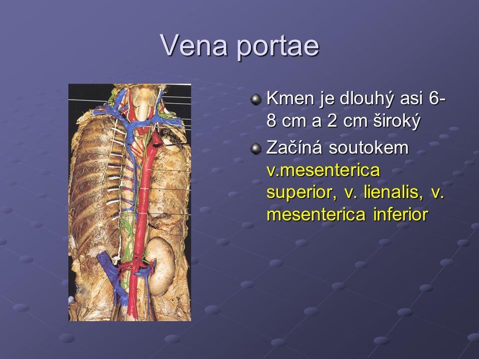 Vena portae Kmen je dlouhý asi 6- 8 cm a 2 cm široký Začíná soutokem v.mesenterica superior, v. lienalis, v. mesenterica inferior