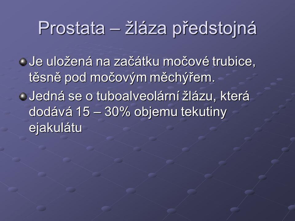 Prostata – žláza předstojná Je uložená na začátku močové trubice, těsně pod močovým měchýřem. Jedná se o tuboalveolární žlázu, která dodává 15 – 30% o