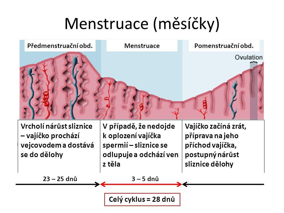 Menstruace (měsíčky) Předmenstruační obd.Pomenstruační obd.Menstruace Vrcholí nárůst sliznice – vajíčko prochází vejcovodem a dostává se do dělohy V p