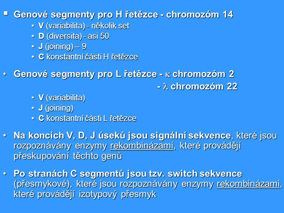  Genové segmenty pro H řetězce - chromozóm 14 V (variabilita) - několik setV (variabilita) - několik set D (diversita) - asi 50D (diversita) - asi 50