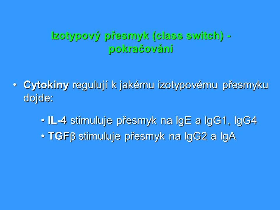 Izotypový přesmyk (class switch) - pokračování Cytokiny regulují k jakému izotypovému přesmyku dojde:Cytokiny regulují k jakému izotypovému přesmyku d