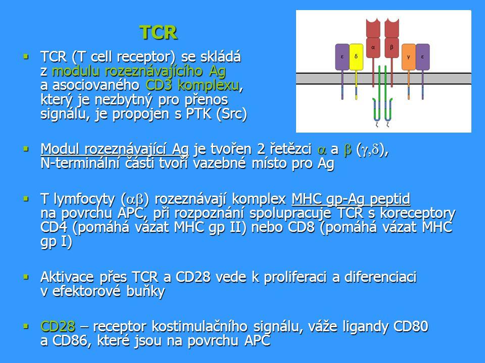TCR  TCR (T cell receptor) se skládá z modulu rozeznávajícího Ag a asociovaného CD3 komplexu, který je nezbytný pro přenos signálu, je propojen s PTK
