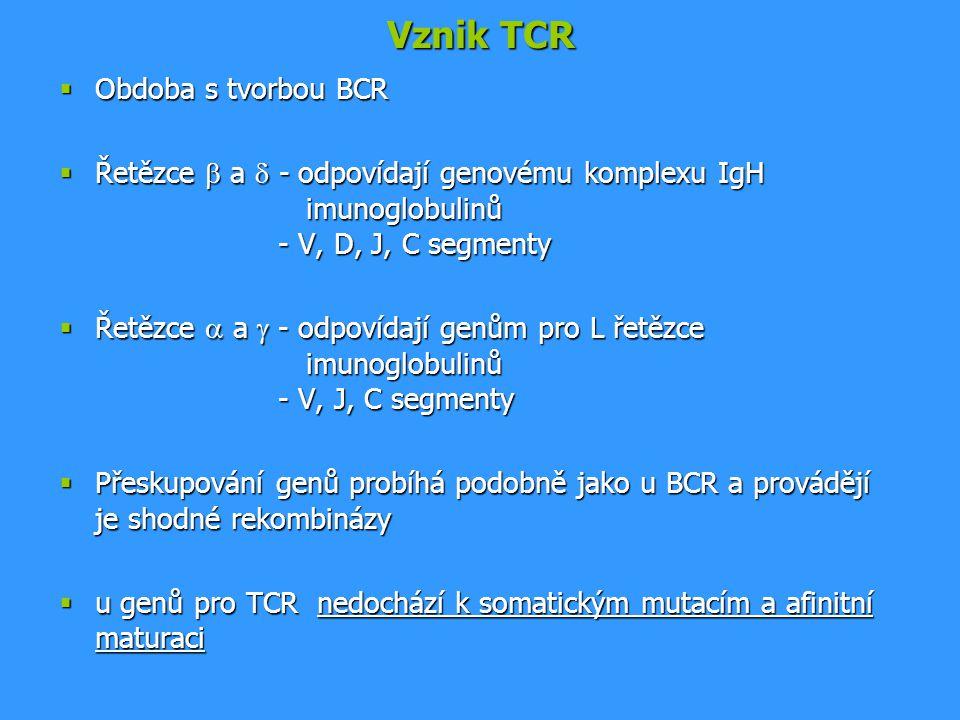 Vznik TCR  Obdoba s tvorbou BCR  Řetězce  a  - odpovídají genovému komplexu IgH imunoglobulinů - V, D, J, C segmenty  Řetězce  a  - odpovídají