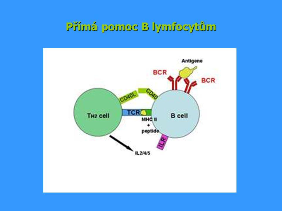 Přímá pomoc B lymfocytům
