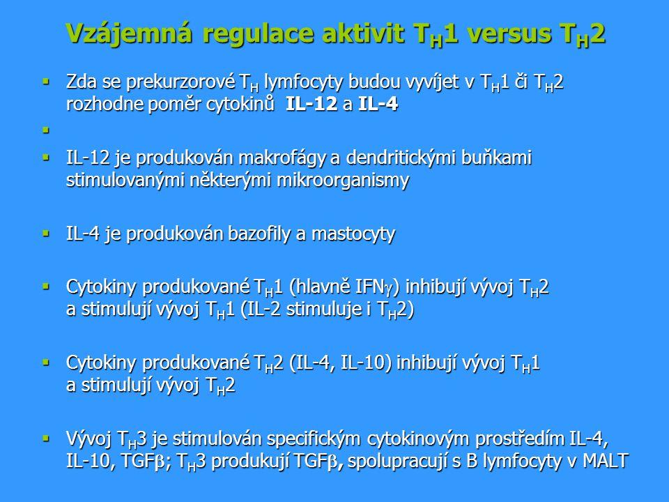 Vzájemná regulace aktivit T H 1 versus T H 2  Zda se prekurzorové T H lymfocyty budou vyvíjet v T H 1 či T H 2 rozhodne poměr cytokinů IL-12 a IL-4 
