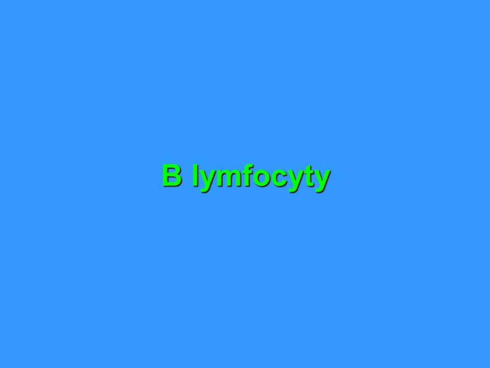 B lymfocyty