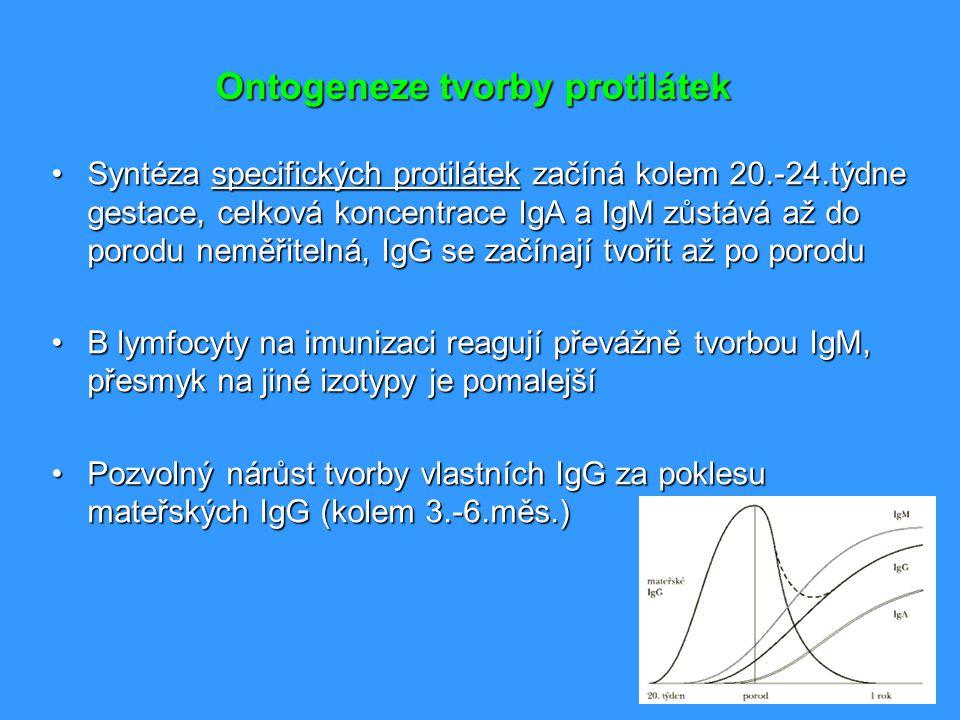 Ontogeneze tvorby protilátek Syntéza specifických protilátek začíná kolem 20.-24.týdne gestace, celková koncentrace IgA a IgM zůstává až do porodu nem