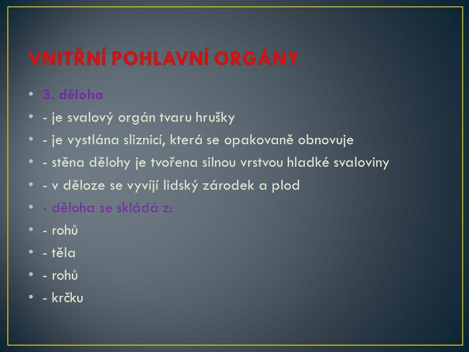 3. děloha - je svalový orgán tvaru hrušky - je vystlána sliznicí, která se opakovaně obnovuje - stěna dělohy je tvořena silnou vrstvou hladké svalovin