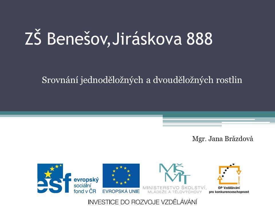 Srovnání jednoděložných a dvouděložných rostlin Mgr. Jana Brázdová ZŠ Benešov,Jiráskova 888