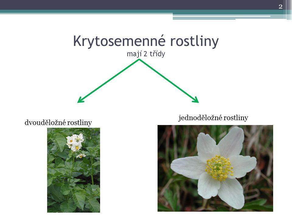 Krytosemenné rostliny mají 2 třídy 2 dvouděložné rostliny jednoděložné rostliny