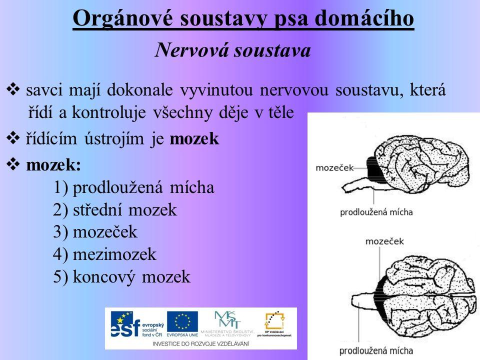 Orgánové soustavy psa domácího Nervová soustava  savci mají dokonale vyvinutou nervovou soustavu, která řídí a kontroluje všechny děje v těle  řídíc