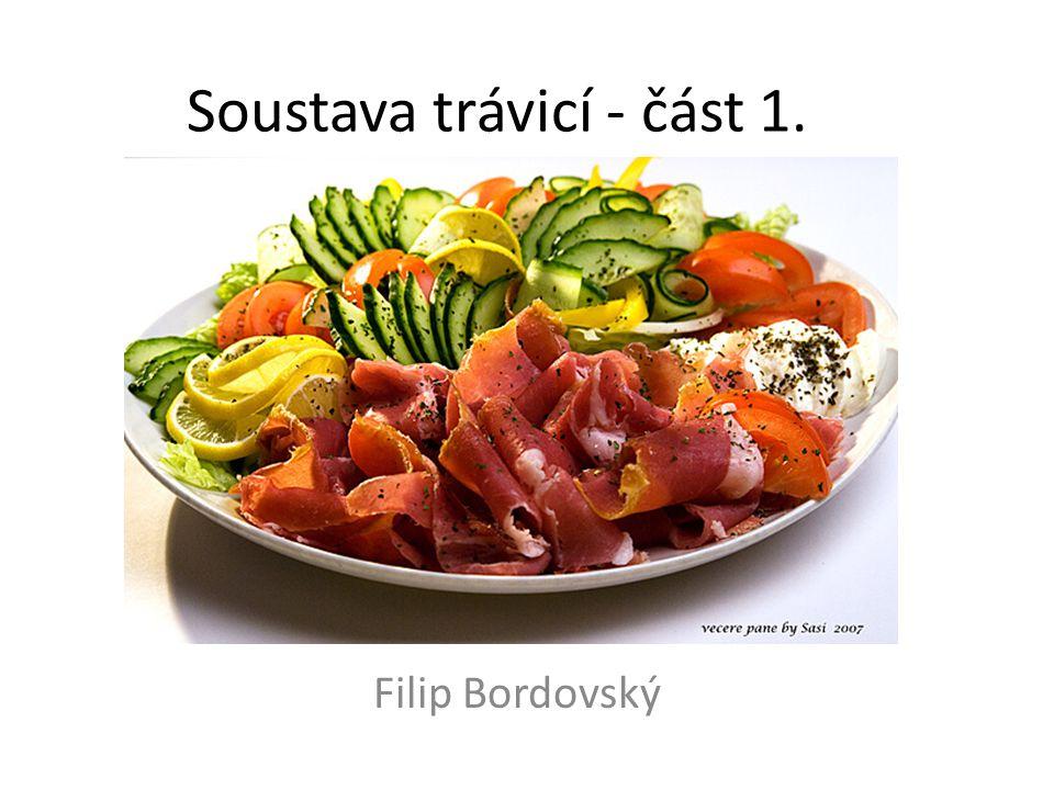 Soustava trávicí - část 1. Filip Bordovský