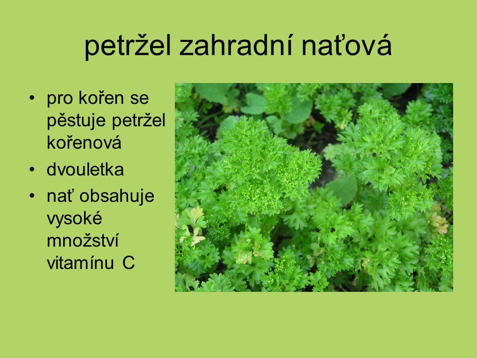 petržel zahradní naťová pro kořen se pěstuje petržel kořenová dvouletka nať obsahuje vysoké množství vitamínu C