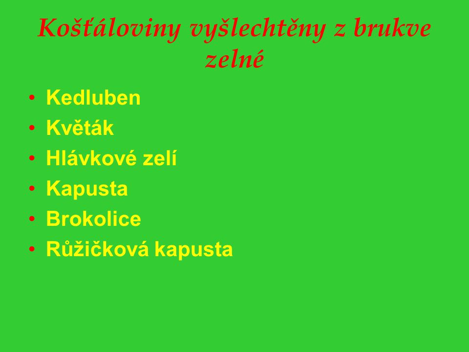 Košťáloviny vyšlechtěny z brukve zelné Kedluben Květák Hlávkové zelí Kapusta Brokolice Růžičková kapusta