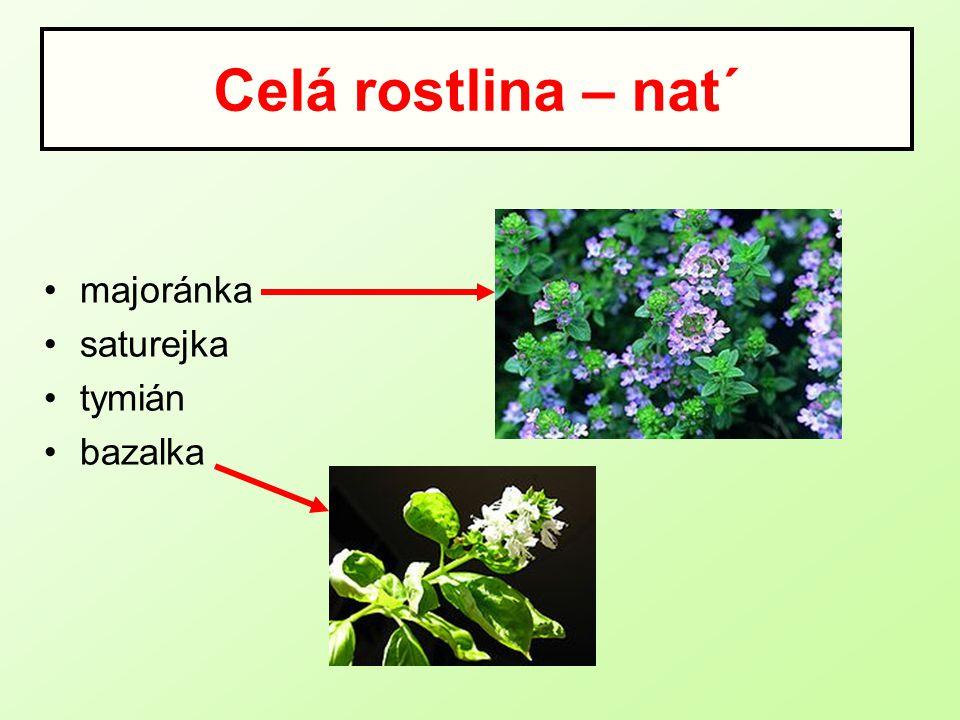 Celá rostlina – nat´ majoránka saturejka tymián bazalka