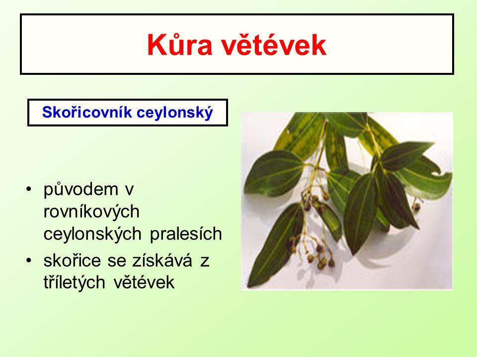 Kůra větévek původem v rovníkových ceylonských pralesích skořice se získává z tříletých větévek Skořicovník ceylonský