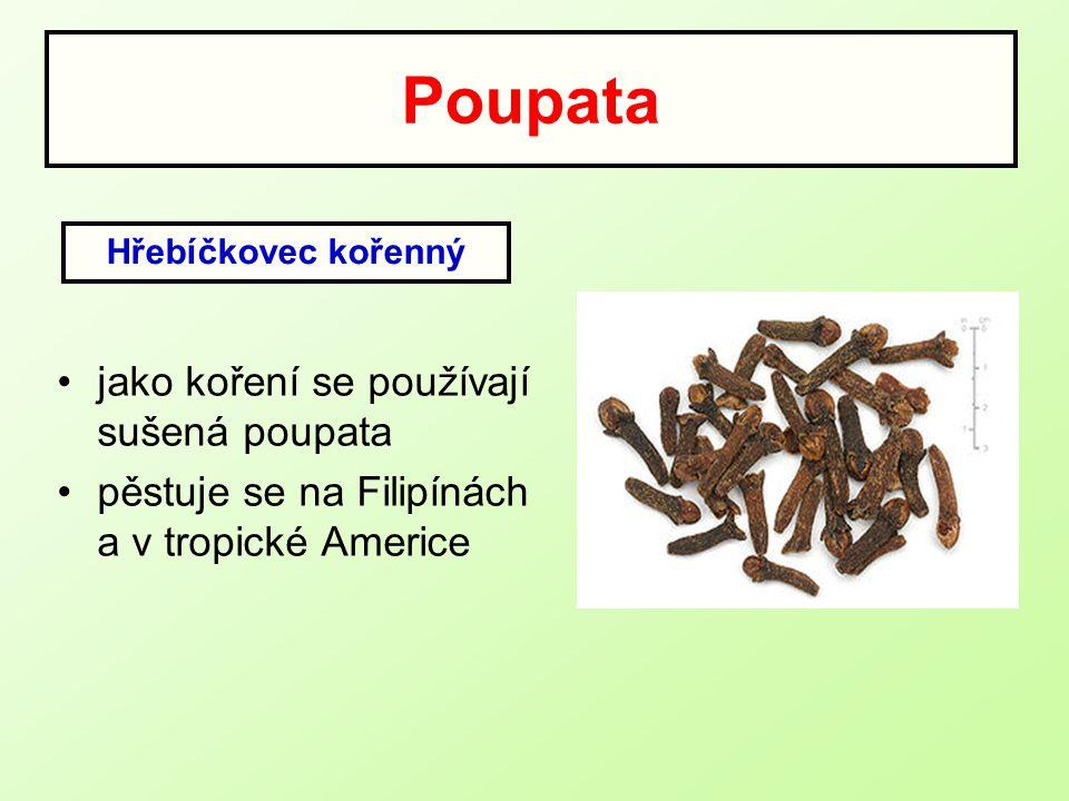 Poupata jako koření se používají sušená poupata pěstuje se na Filipínách a v tropické Americe Hřebíčkovec kořenný