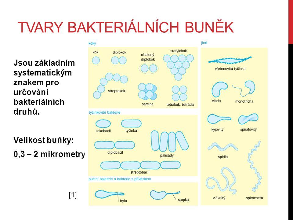 TVARY BAKTERIÁLNÍCH BUNĚK Jsou základním systematickým znakem pro určování bakteriálních druhů. Velikost buňky: 0,3 – 2 mikrometry [1][1]