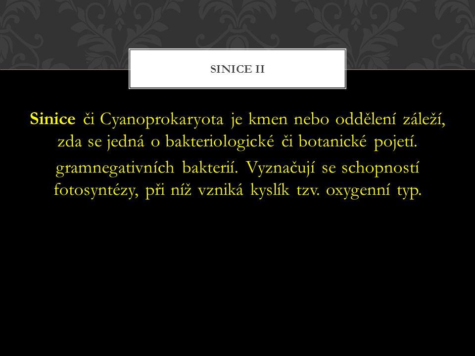 Sinice či Cyanoprokaryota je kmen nebo oddělení záleží, zda se jedná o bakteriologické či botanické pojetí. gramnegativních bakterií. Vyznačují se sch