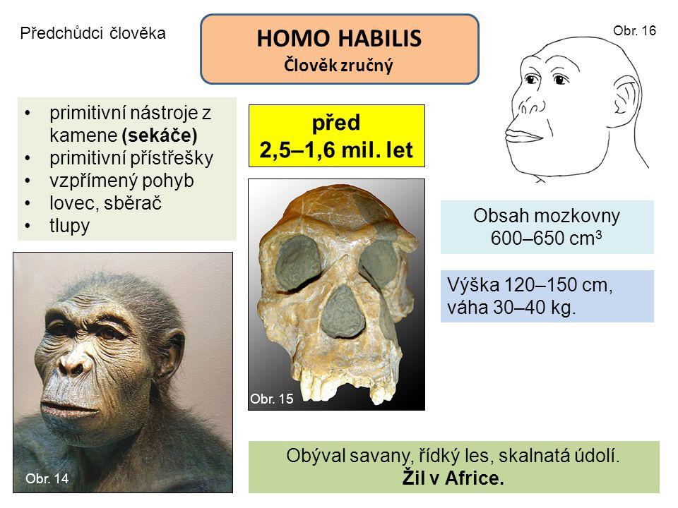 HOMO HABILIS Člověk zručný Předchůdci člověka před 2,5–1,6 mil. let Obsah mozkovny 600–650 cm 3 primitivní nástroje z kamene (sekáče) primitivní příst