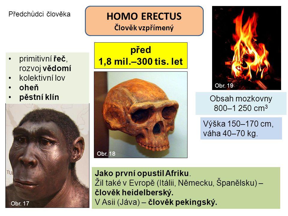 Předchůdci člověka HOMO ERECTUS Člověk vzpřímený před 1,8 mil.–300 tis. let Obsah mozkovny 800–1 250 cm 3 Výška 150–170 cm, váha 40–70 kg. primitivní