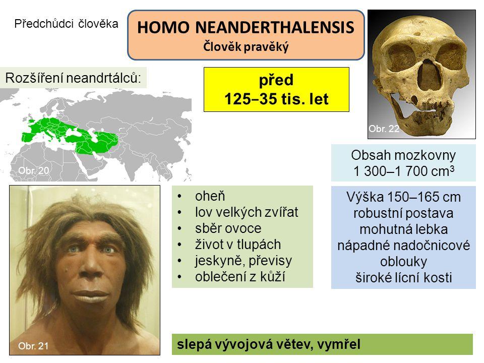 Předchůdci člověka HOMO NEANDERTHALENSIS Člověk pravěký Obsah mozkovny 1 300–1 700 cm 3 slepá vývojová větev, vymřel Rozšíření neandrtálců: Výška 150–