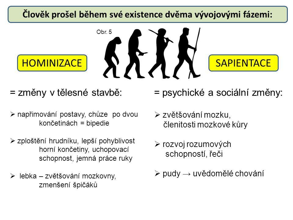 Člověk prošel během své existence dvěma vývojovými fázemi: HOMINIZACESAPIENTACE = změny v tělesné stavbě:  napřimování postavy, chůze po dvou končeti