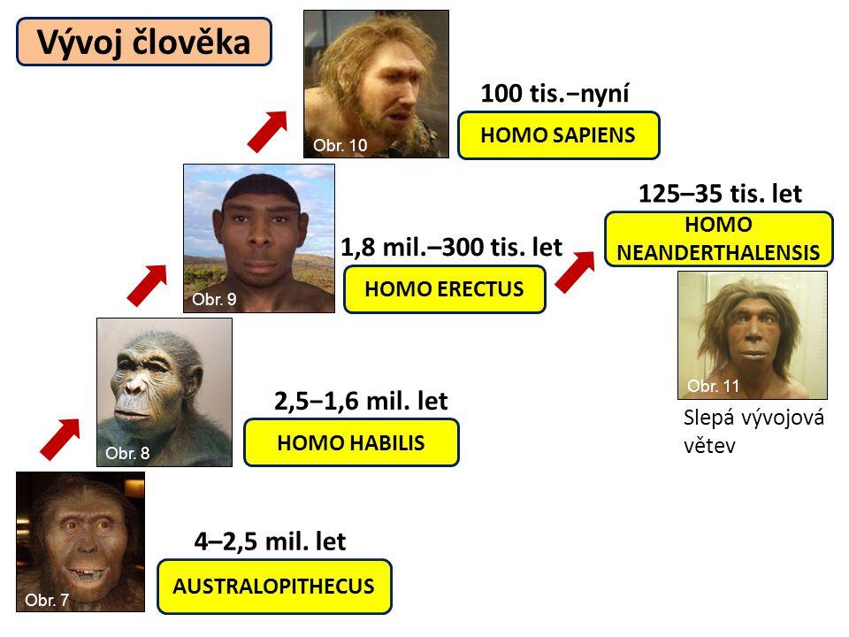 HOMO HABILIS HOMO SAPIENS HOMO ERECTUS HOMO NEANDERTHALENSIS AUSTRALOPITHECUS 4–2,5 mil. let 100 tis.−nyní 1,8 mil.–300 tis. let 2,5−1,6 mil. let 125–