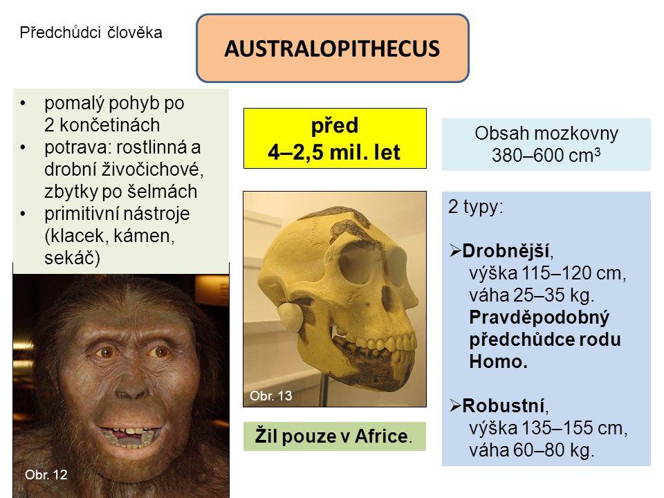 Předchůdci člověka AUSTRALOPITHECUS před 4–2,5 mil. let Obsah mozkovny 380–600 cm 3 2 typy:  Drobnější, výška 115–120 cm, váha 25–35 kg. Pravděpodobn