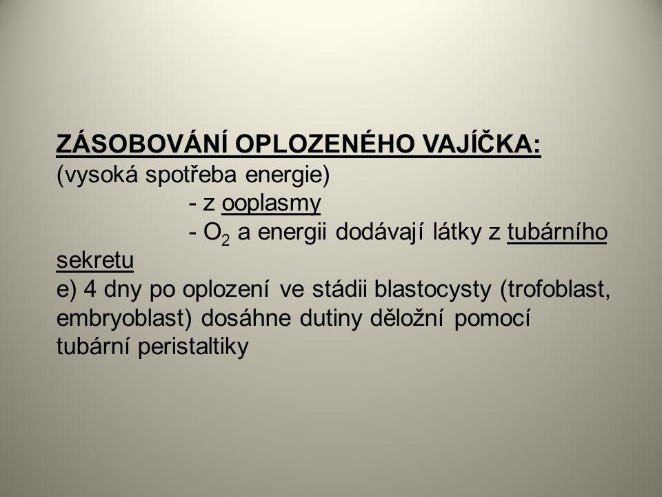 ZÁSOBOVÁNÍ OPLOZENÉHO VAJÍČKA: (vysoká spotřeba energie) - z ooplasmy - O 2 a energii dodávají látky z tubárního sekretu e) 4 dny po oplození ve stádii blastocysty (trofoblast, embryoblast) dosáhne dutiny děložní pomocí tubární peristaltiky