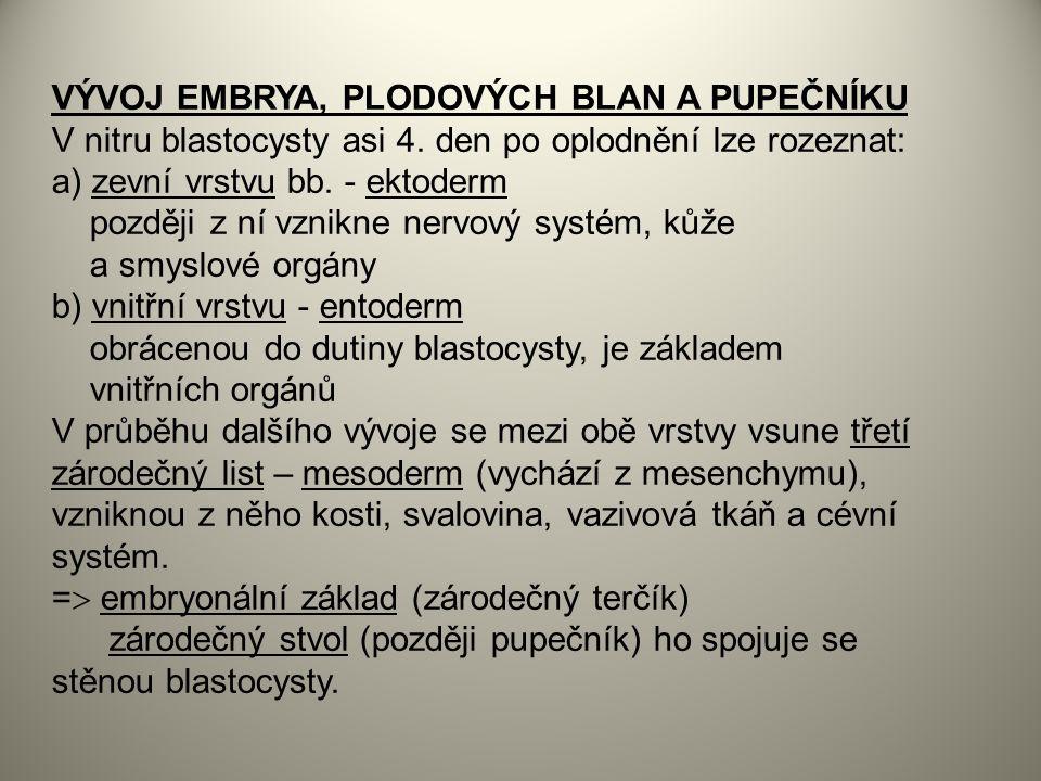 VÝVOJ EMBRYA, PLODOVÝCH BLAN A PUPEČNÍKU V nitru blastocysty asi 4.